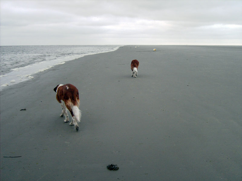 Bonnie und Barry am Strand von St. Peter-Ording